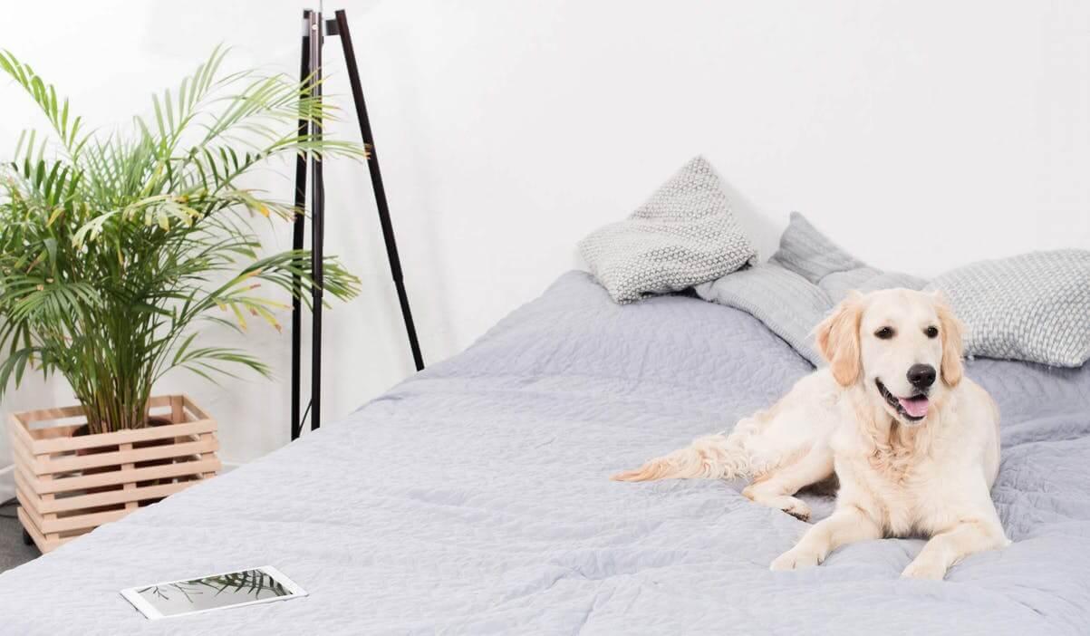 如何训练你的狗去它自己的地方待着