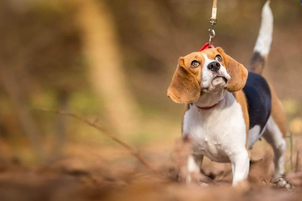 狗狗为什么打喷嚏?