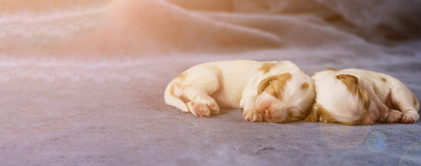 狗的癫痫发作和脑病