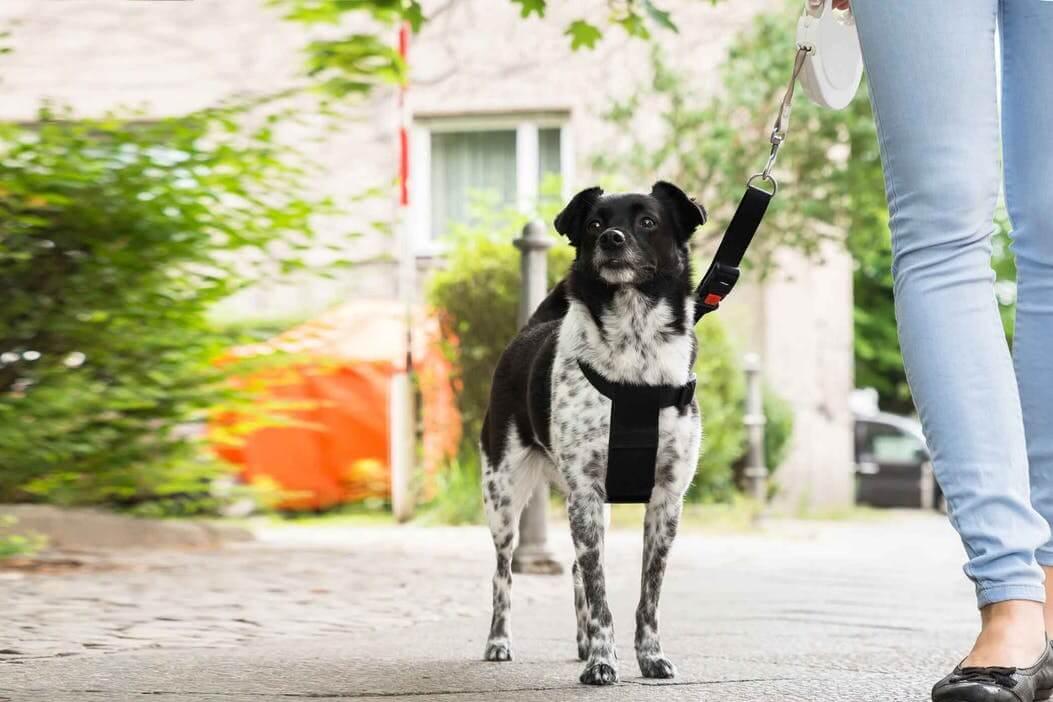 狗一直不停地叫的行为应该如何阻止