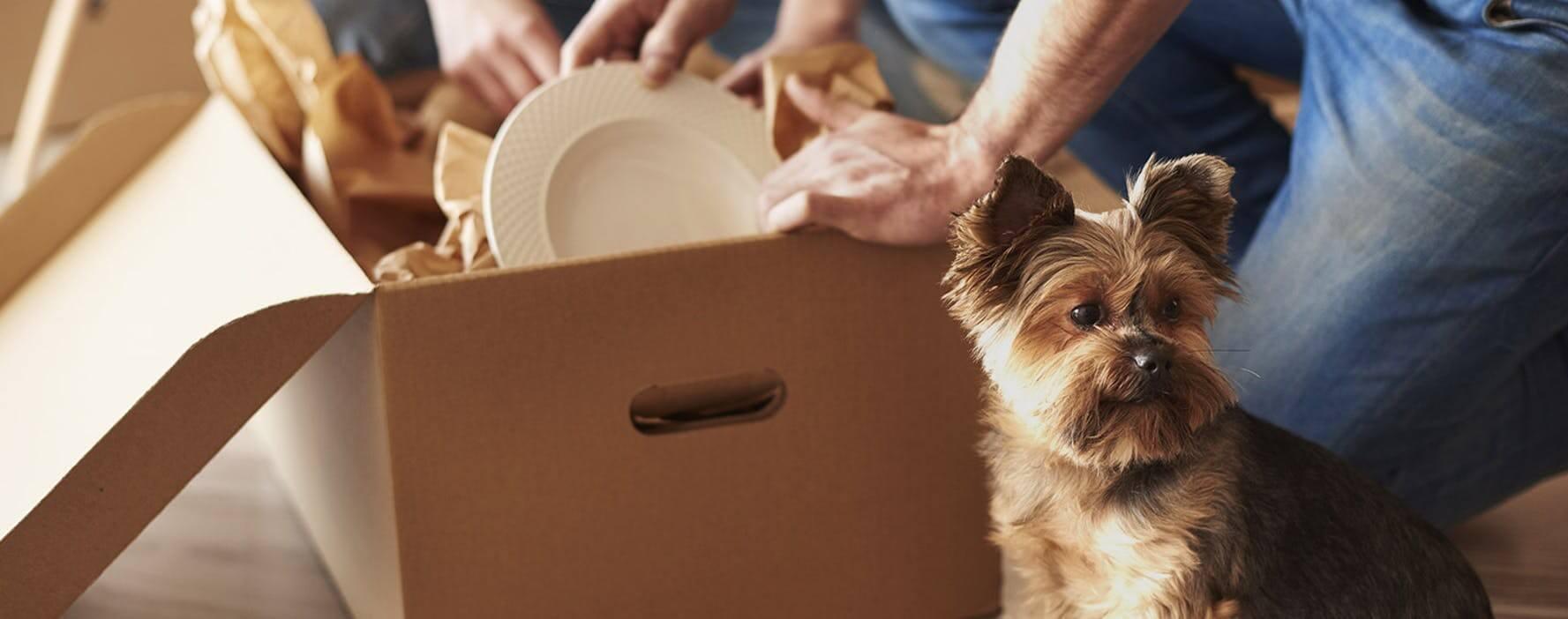如何训练你的小狗接受新家