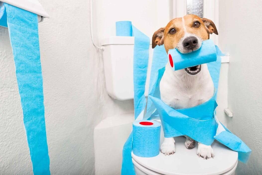 怎么训练狗狗大小便