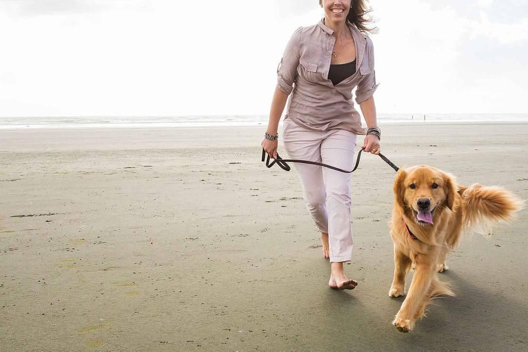 适合新手养的最佳狗品种
