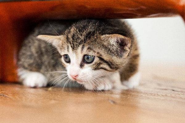猫害怕人是怎么回事,应该如何解决?