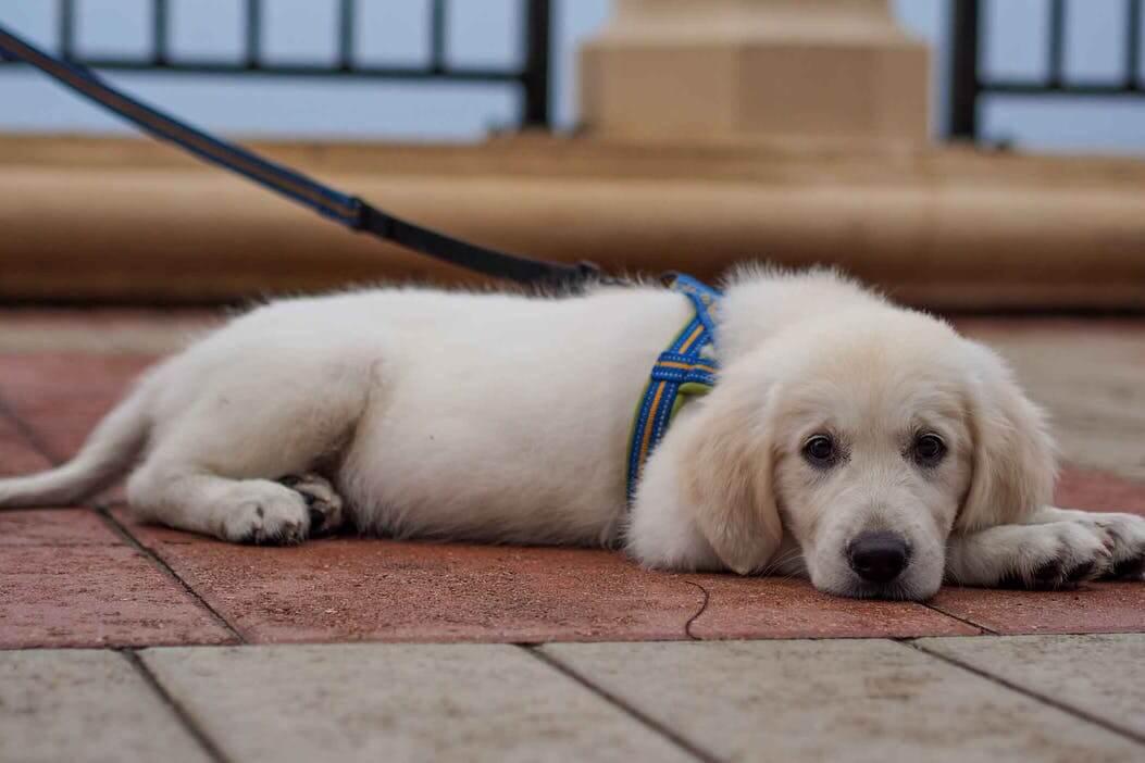 狗狗得关节炎的治疗方法