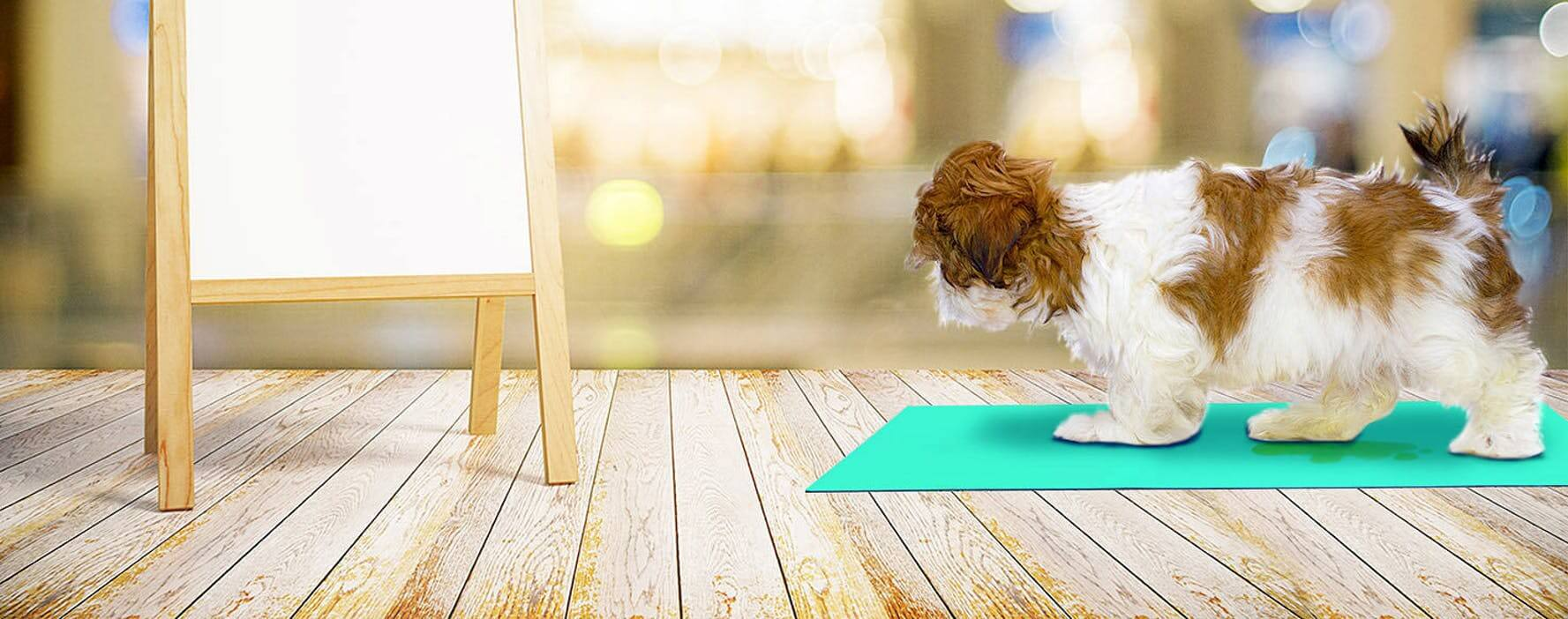 狗肝病症状及治疗方法