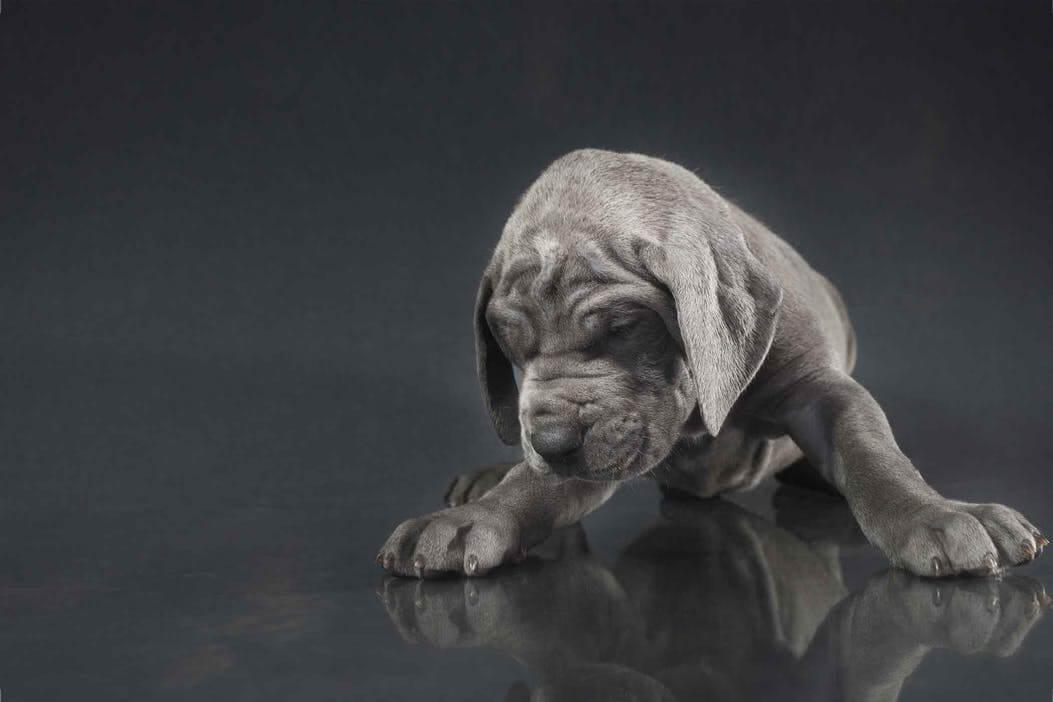 狗狗便秘症状及治疗