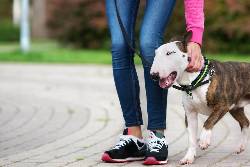 狗狗皮肤瘙痒的7个家庭治疗办法