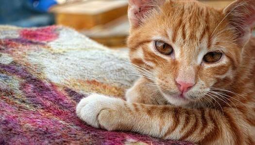 如何阻止猫抓地毯