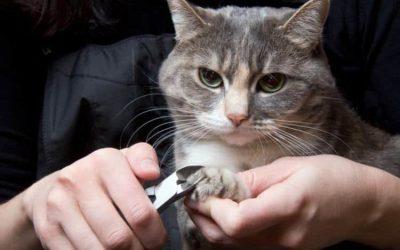 怎么给猫剪指甲(实用教程)