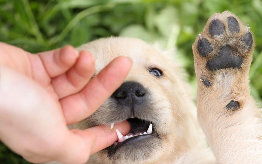如何教你的狗控制咬的力度