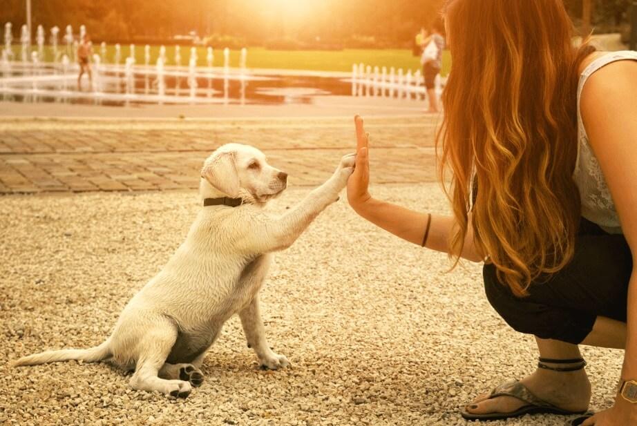如何训练你的小狗