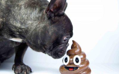 为什么狗狗喜欢吃便便(屎)