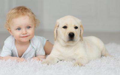 如何处理狗狗与婴儿(小孩)间的关系