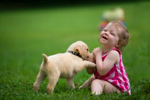 狗和小孩(婴儿)