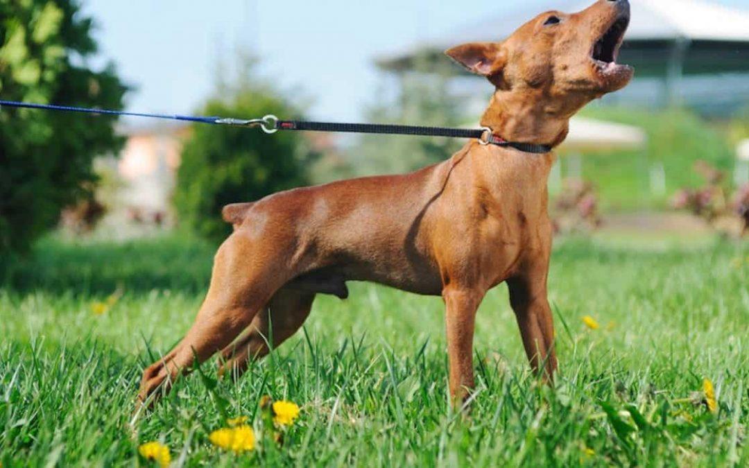 狗突然变得有攻击性应该如何阻止它