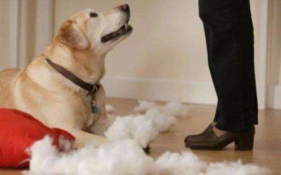 如何阻止你的狗拆家