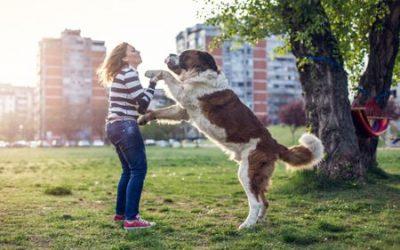 如何阻止你的狗往你的身上跳,扑向你