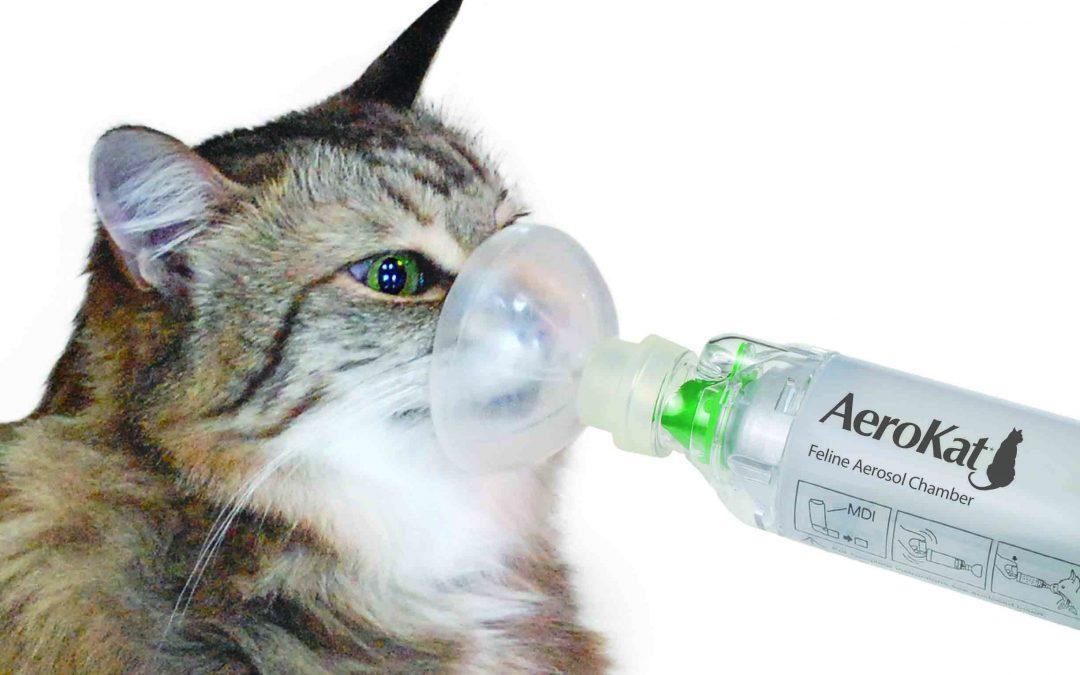 猫哮喘的症状及治疗方法