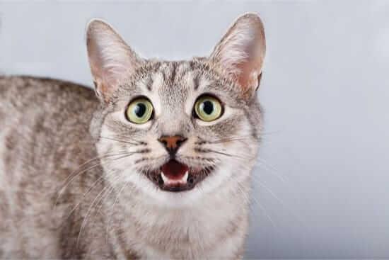 猫一只喵喵叫应该如何阻止