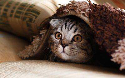 小猫有压力和焦虑的症状