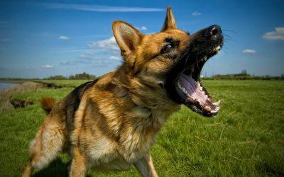 狗咬人的行为应该如何阻止,如何防止被狗咬