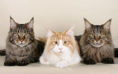 多长时间应该给猫喂食?