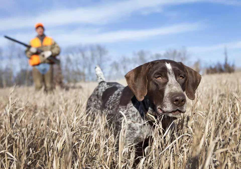 6个最佳猎犬品种