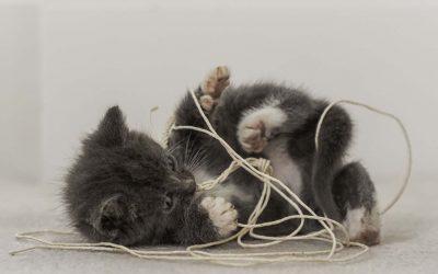 猫吞食了细绳该怎么办?