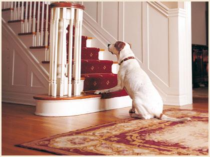 狗害怕爬楼梯是什么原因,该怎么解决