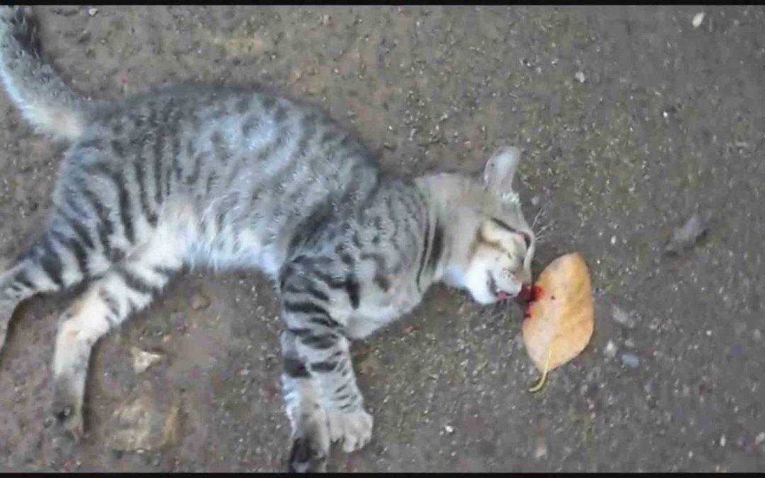 朋友的猫死了,我该怎么帮助她