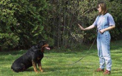 小狗的入门训练准备