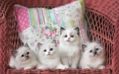 如何找到最适合自己的猫咪,养猫需要准备什么