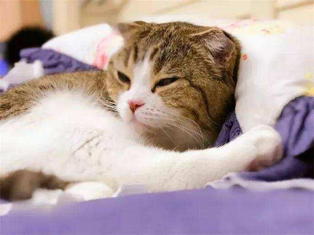 怎么管教猫咪?管教猫指南