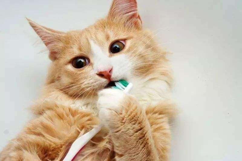 猫犬口腔健康保养,牙齿护理方法