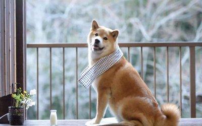 狗狗可以吃海鲜吗?
