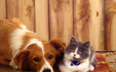 狗狗猫咪变的不开心,闷闷不乐是怎么回事