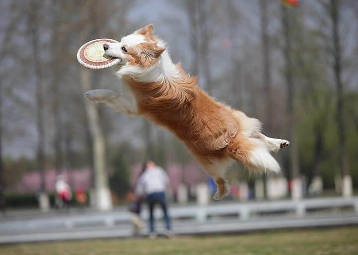 狗狗基本动作训练方法