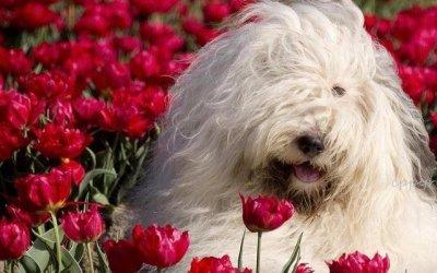狗狗需要补充哪些营养可以让毛发更健康美丽