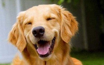 狗狗肢体语言解读大全