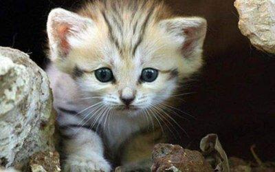 猫下巴长粉刺的原因,临床症状,治疗方法