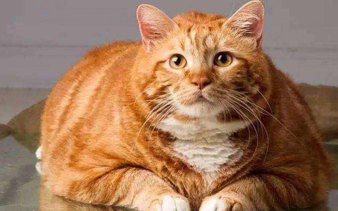 怎么帮助猫咪狗狗减肥,7种方法帮助它们减肥