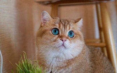 猫咪示好的表现方法,管教猫咪的要点
