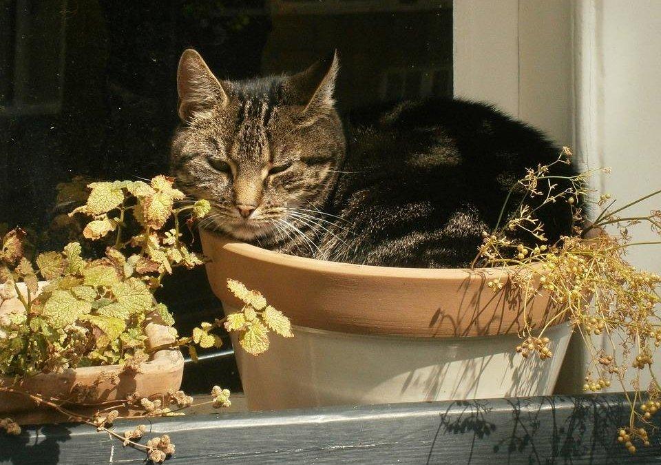 猫咪忧郁抑郁症状的表现,情绪低落的表现,该怎么治疗