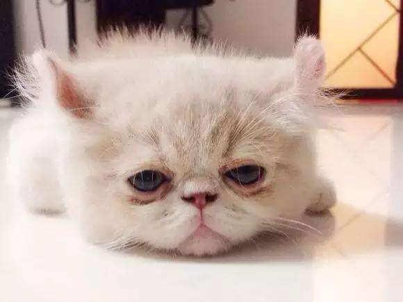 猫咪腹泻的原因,治疗方法,如何预防