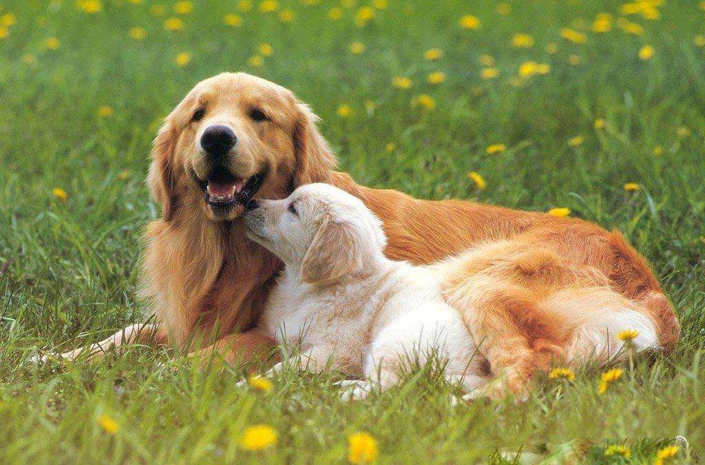 饲养狗狗需要了解些什么