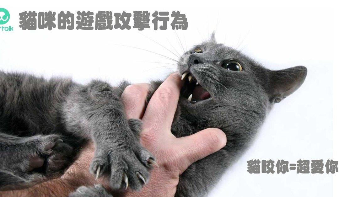 为什么猫咪会有游戏攻击行为?