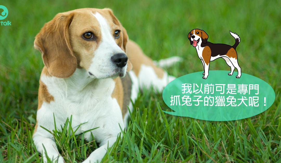 中型犬品种大全图片名称