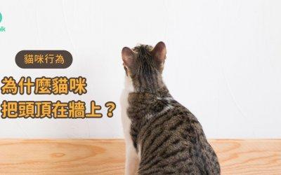 为什么猫咪会把头顶在墙上?