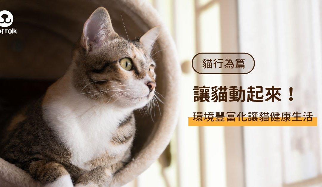 如何让猫动起来?丰富环境让猫健康生活